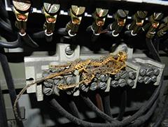 Sachschaden in der Stromversogrung durch Nagetierfrass